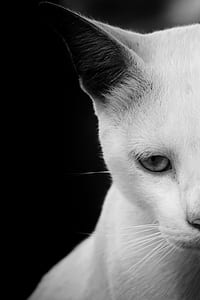 half face grayscale photo of a cat