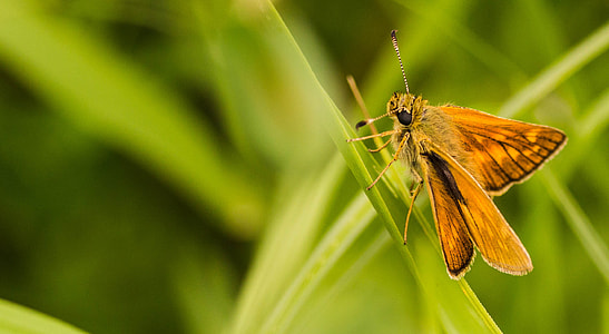closed photo of brown moth butterfly on green leaf grass