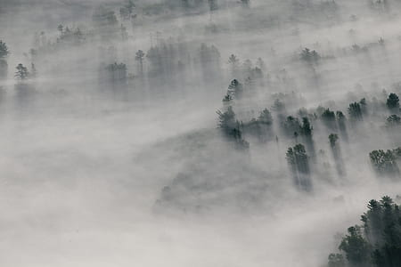 green tropical trees covered in mist