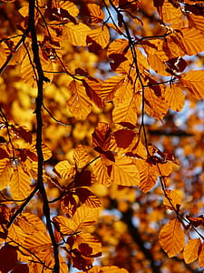 withered leaves on tree