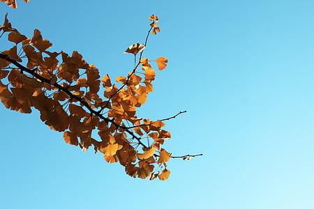 worm's eye photography of yellow leaf tree