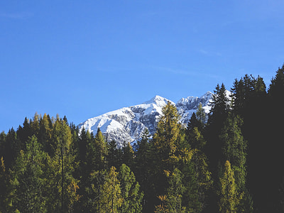 tree lines in front of mountain alps