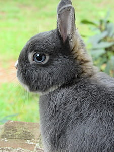 photo of gray rabbit