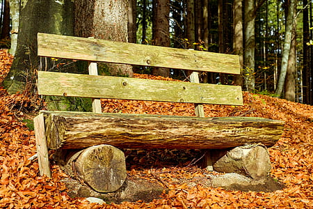 brown wooden log chair during daytime