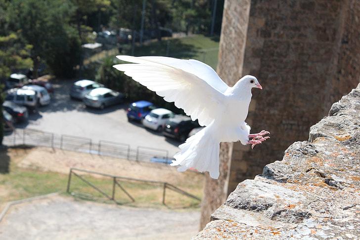 white pigeon during daytime