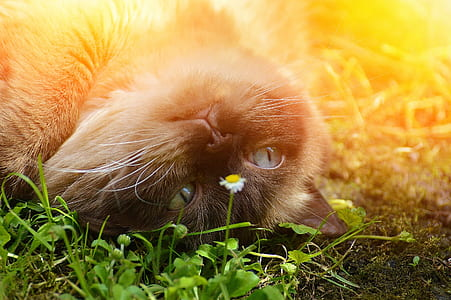 gray and brown cat lying soil
