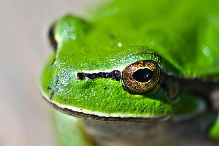 Green frog eyes