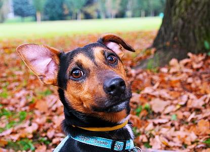 shallow focus photography of short-coated black dog
