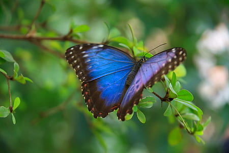blue, black, and white butterfly on green leaf plant close-up photography during daytime