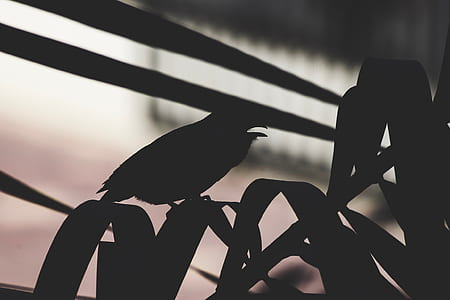 silhouette photography of bird on linear leaf plant