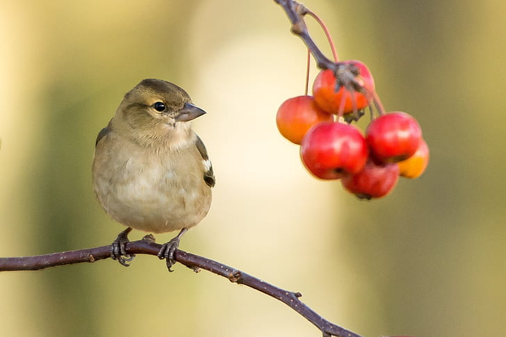brown bird with red fruits