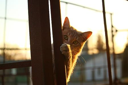 orange cat behind brown rod