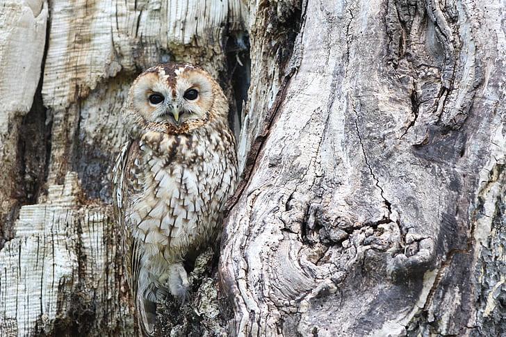 gray owl on tree branch