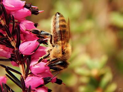 bokeh shot of yellow and brown bee