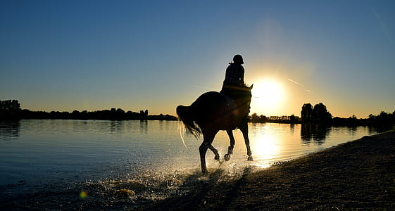 silhouette photography of person riding horse on shore