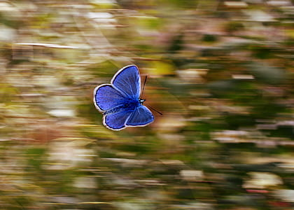 selective focus photography morpho butterfly flying
