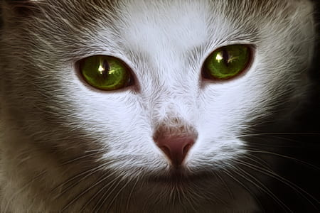 closeup photography of white and grey cat