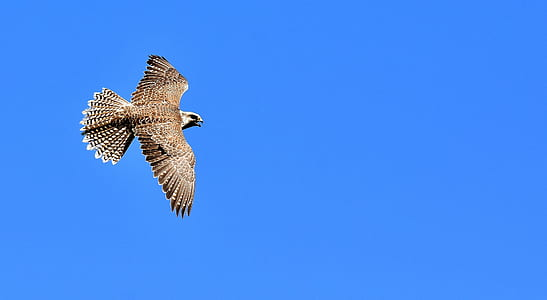 photo of flight of brown and white eagle