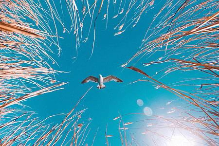 Flying seagull bird in blue sky
