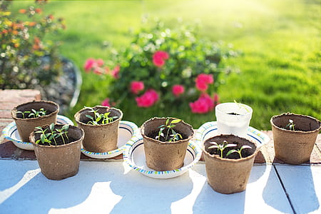 six brown plant pots with green leaf plants
