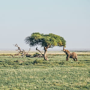 elephant reaching leaves of tree during daytime