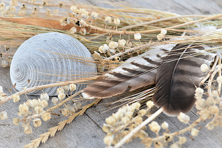 feathers beside sheel