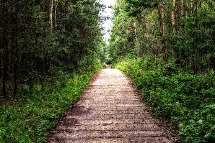 gray asphalt road near on green trees