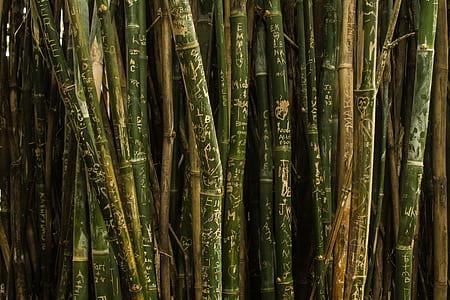 brown and green bamboos