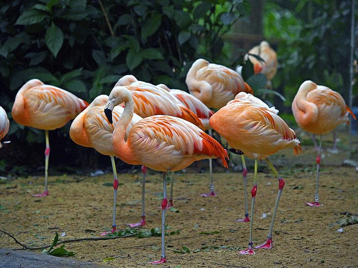 orange-and-white flamingos