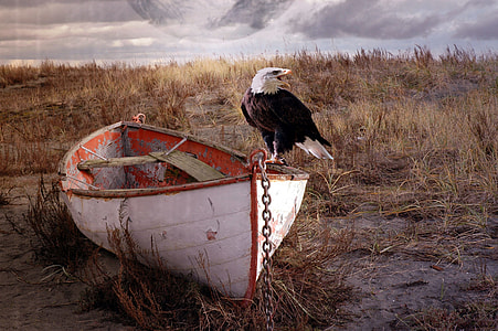 white boat with bald eagle standing