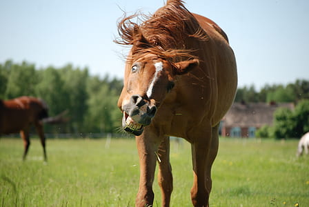 brown and white coated horse
