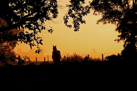 brown horse near fence during sunset