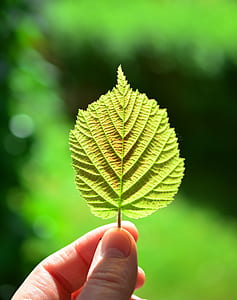 selective focus photography of person holding green leaf