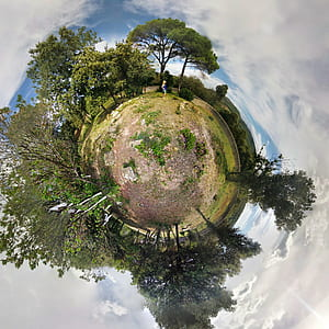 360 degree photography of forest