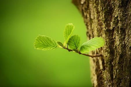 green leaf plant on tree