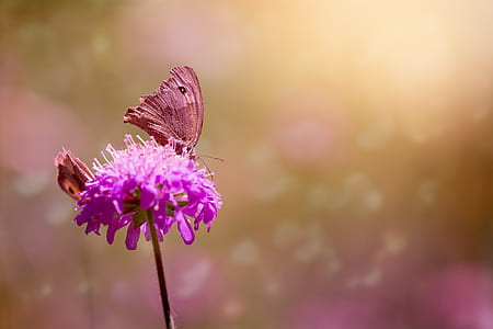 purple chives flower and brown moth in closeup photo