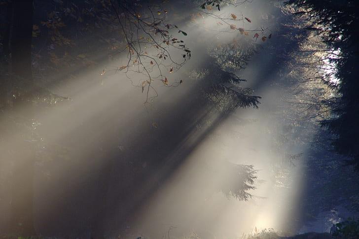 sun rays on green trees