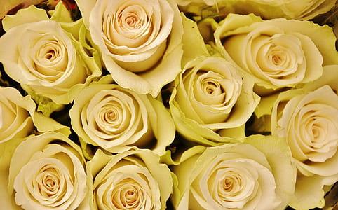 white rose lot closeup photography