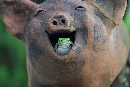 green and white frog in brown ceramic pig mouth figurine during daytime