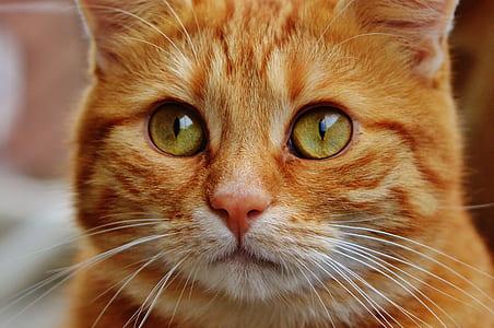 close up photo of orange and white tabby cat