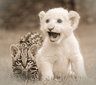 two lion and leopard cubs