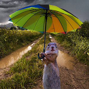 photo of squirrel holding umbrella