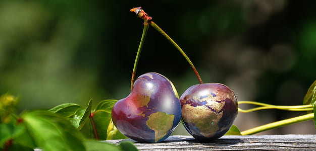 shallow focus photography of cherries