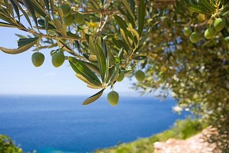 green leafed tree near seashore during daytime