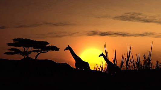 silhouette of two giraffes near trees