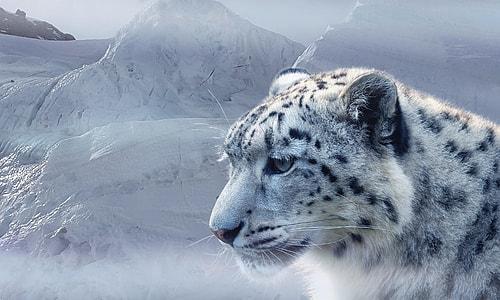 photo of white feline