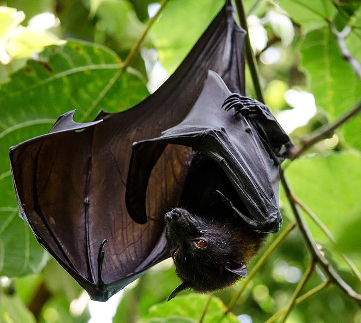 shallow focus photography of black fruit bat