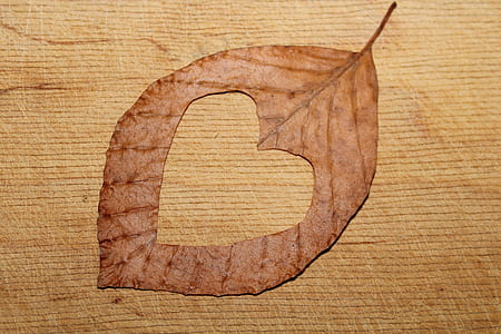 heart cutted in leaf