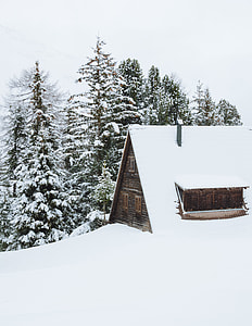 house covered in snow beside forest