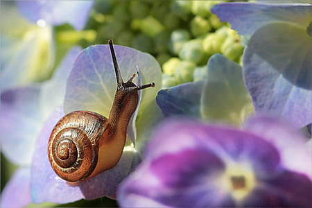 brown snail on purple-and-yellow flowers